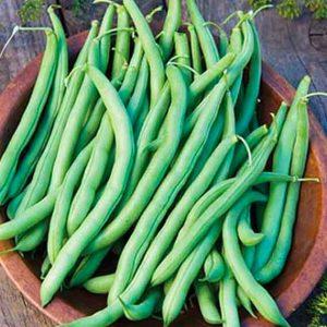 Blue Lake Bush Beans
